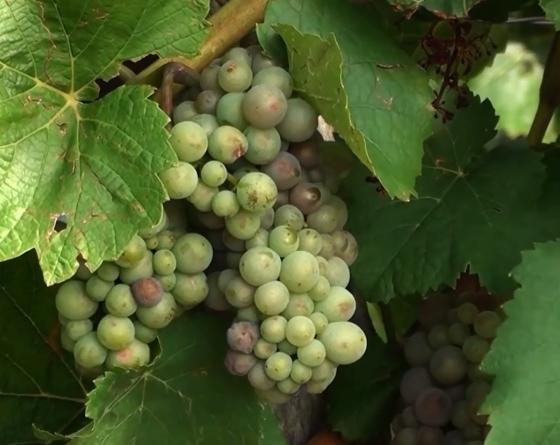 La Route des Vins d'Alsace - 2 nuits